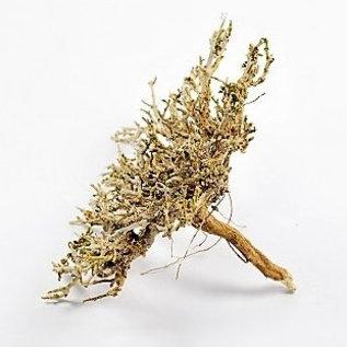 Onlineaquarium spullen Bush hout natural