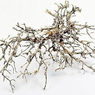 Onlineaquarium spullen Buschholz naturell