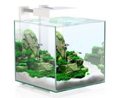 Nano aquaria (10-40 liters)