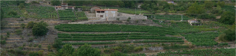 Weinhänge: ein galicisches Erbe