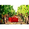 Primitivo Quota 29 Rosso Cantine Menhir Salento - Puglia, Italië