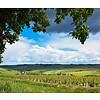 Bourgogne Côtes d'Auxerre Corps de Garde Goisot BIO - Bourgogne, Frankrijk