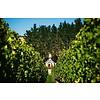 Sauvignon Blanc Domaine Le Petit Clos Henri - Marlborough, Nieuw Zeeland