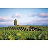 Nr. 22 Chardonnay / Viognier Réserve - Pays d'Oc, Frankrijk