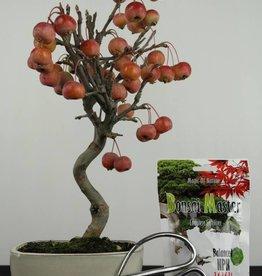 Set de regalo Malus bonsai, no. G43