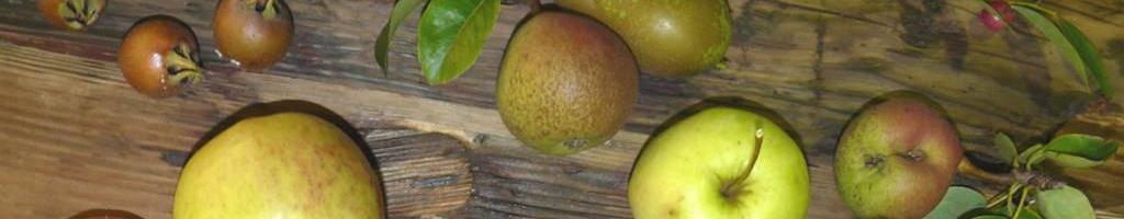 Halfstam fruitbomen