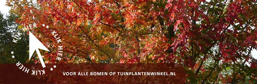 Sierbomen kopen bij tuinplantenwinkel.nl