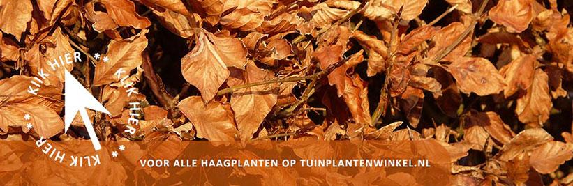 Klik hier voor alle haagplanten
