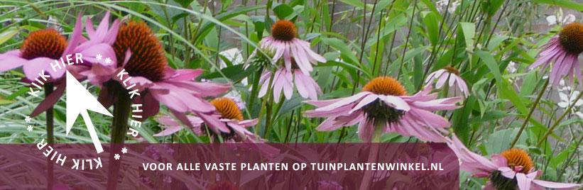 Klik hier voor alle vaste planten