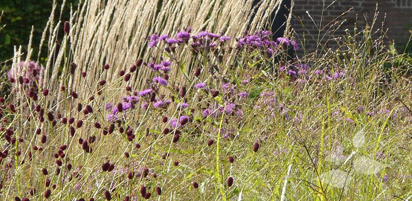 Siergrassen combineren met vaste planten