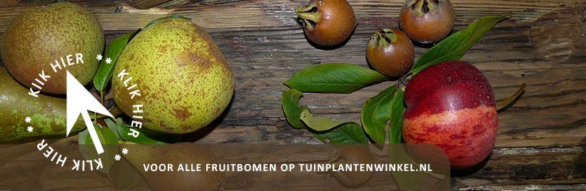 Klik hier voor fruitbomen