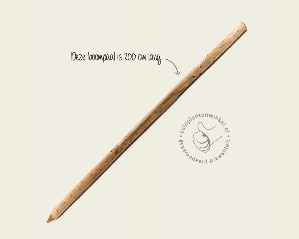 Boompaal - 200 cm