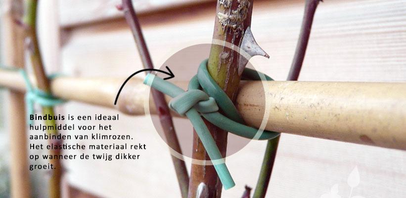 Klimroos aanbinden met bindbuis