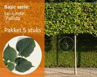 Lei-Linde - Basic - pakket 5 stuks + EXTRA'S!
