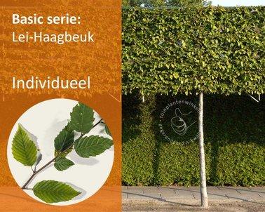 Klik hier om Lei-Haagbeuk - Basic - individueel te kopen