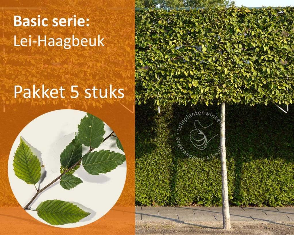 Lei-Haagbeuk - Basic - pakket 5 stuks + EXTRA'S!