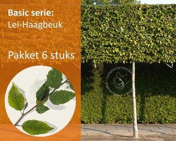 Lei-Haagbeuk - Basic - pakket 6 stuks + EXTRA'S!