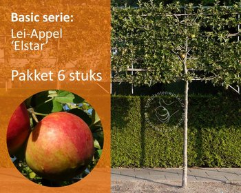Lei-Appel 'Elstar' - Basic - pakket 6 stuks + EXTRA'S!