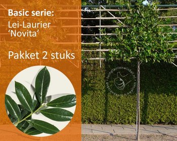 Lei-Laurier - Basic - pakket 2 stuks + EXTRA'S!