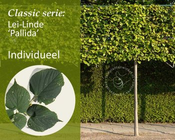 Lei-Linde - Classic - individueel geen extra's