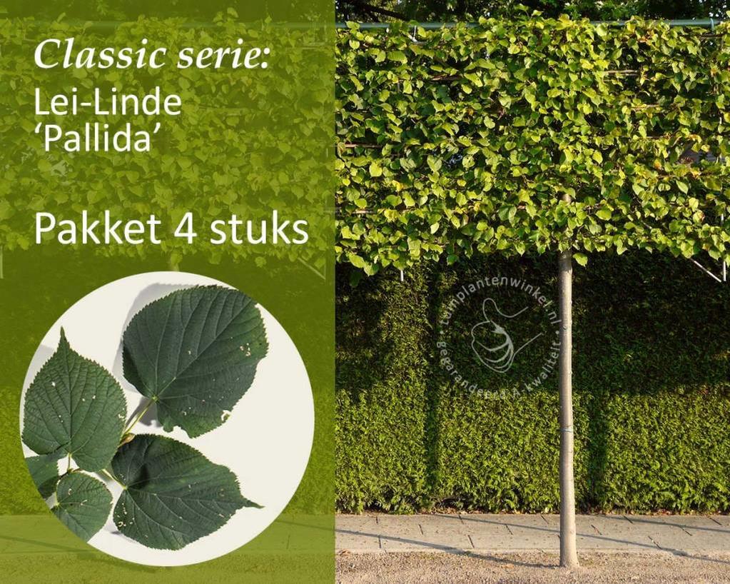 Lei-Linde - Classic - pakket 4 stuks + EXTRA'S!