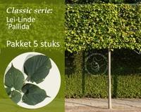 Lei-Linde - Classic - pakket 5 stuks + EXTRA'S!