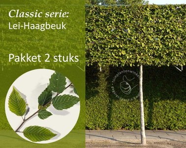Klik hier om Lei-Haagbeuk - Classic - pakket 2 stuks te kopen