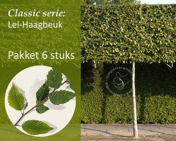 Lei-Haagbeuk - Classic - pakket 6 stuks + EXTRA'S!