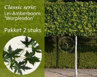 Klik hier om Lei-Amberboom - Classic - pakket 2 stuks te kopen