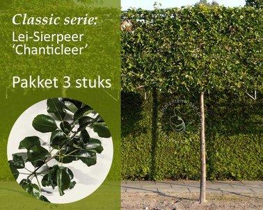 Klik hier om Lei-Sierpeer - Classic - pakket 3 stuks te kopen