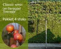 Lei-Sierappel 'Evereste' - Classic - pakket 4 stuks + EXTRA'S!