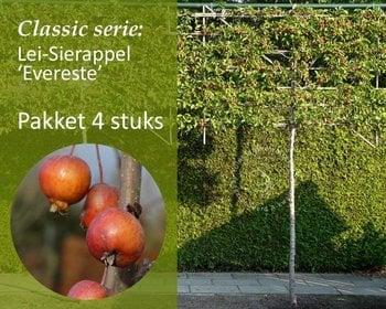 Lei-Sierappel 'Evereste' - Classic - pakket 4 stuks + EXTRA'S !