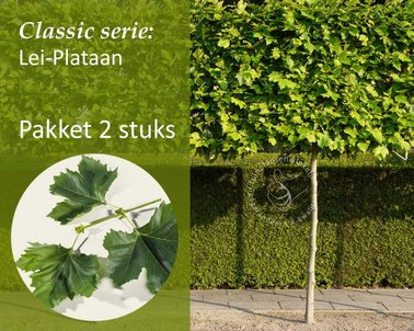 Klik hier om Lei-Plataan - Classic - pakket 2 stuks te kopen