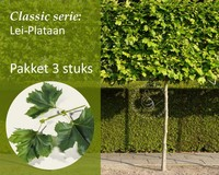 Lei-Plataan - Classic - pakket 3 stuks + EXTRA'S!