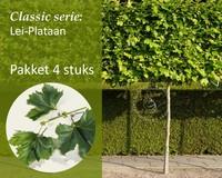Lei-Plataan - Classic - pakket 4 stuks + EXTRA'S!