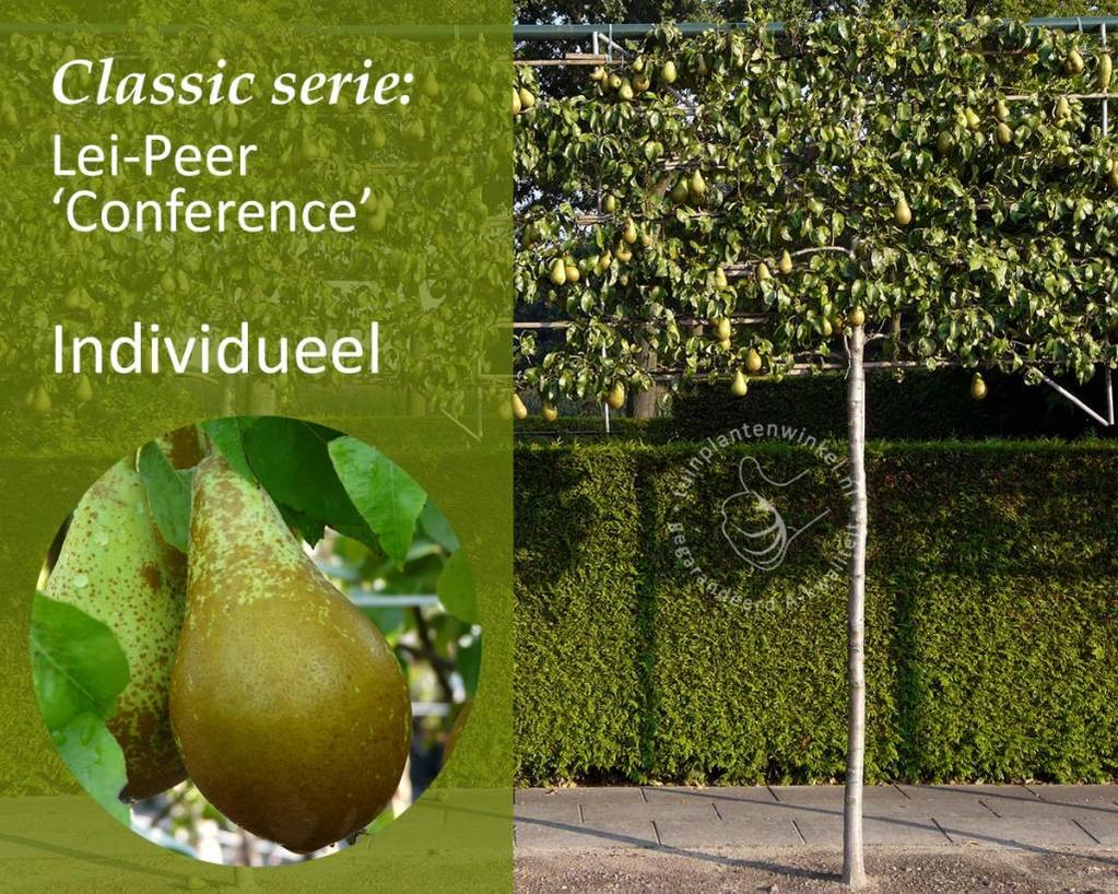 Lei-Peer 'Conference' - Classic - individueel geen extra's