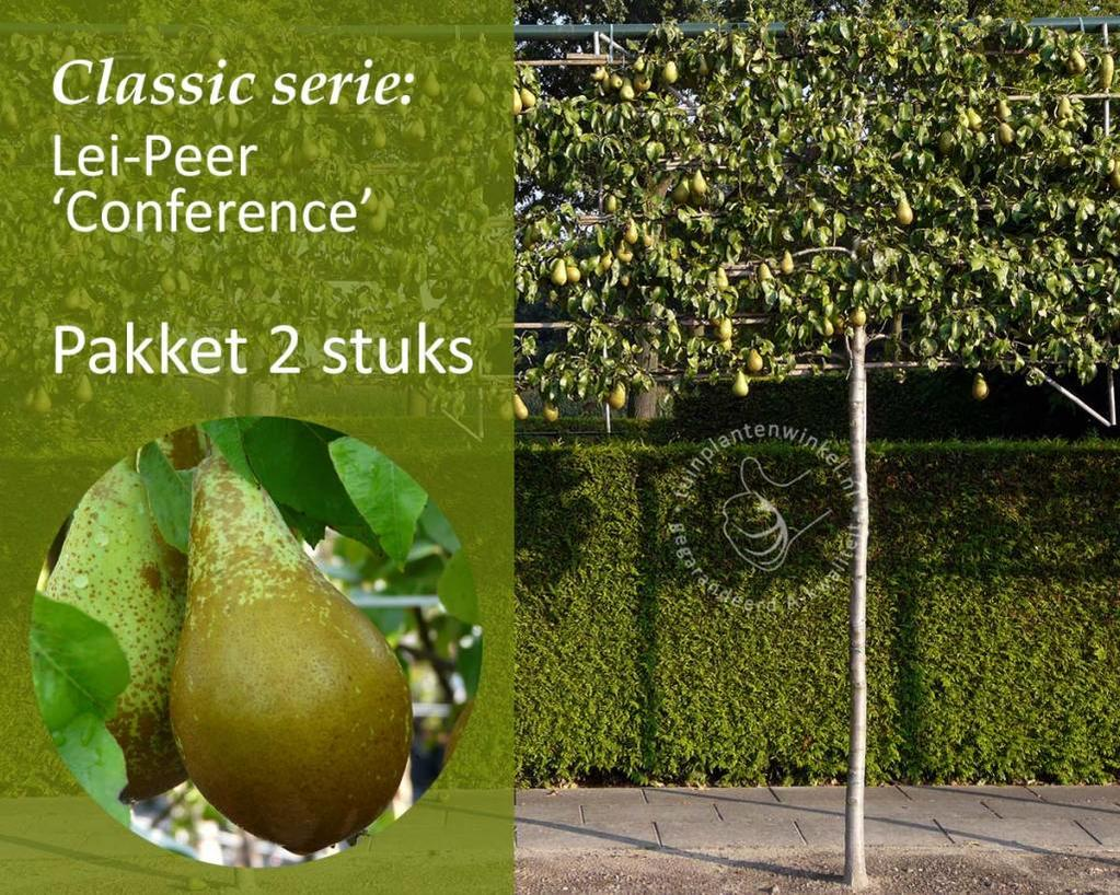 Lei-Peer 'Conference' - Classic - pakket 2 stuks + EXTRA'S!