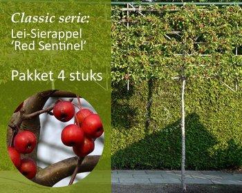 Lei-Sierappel 'Red Sentinel' - Classic - totaalpakket 4 stuks