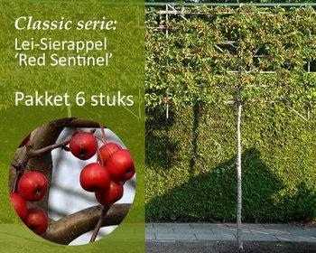 Lei-Sierappel 'Red Sentinel' - Classic - totaalpakket 6 stuks