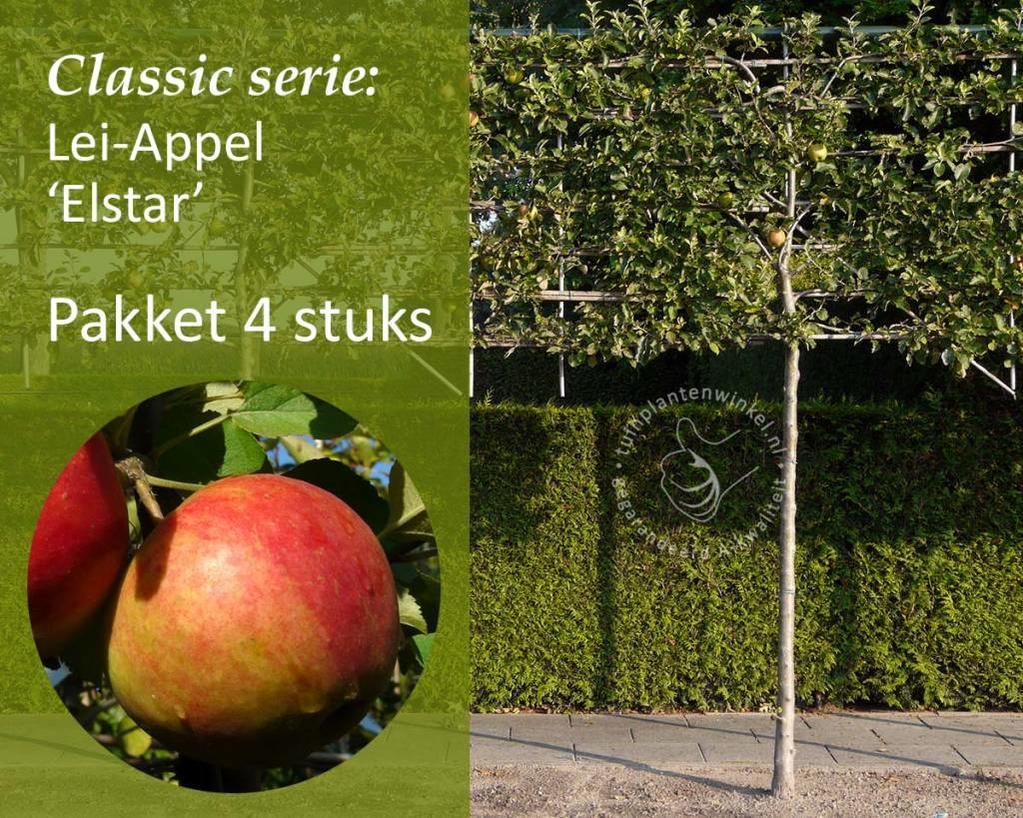 Lei-Appel 'Elstar' - Classic - pakket 4 stuks + EXTRA'S!