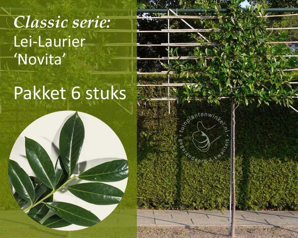 Lei-Laurier - Classic - pakket 6 stuks + EXTRA'S!