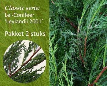 Lei-Conifeer leylandii - Classic - pakket 2 stuks + EXTRA'S!