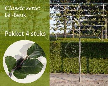 Lei-Groene Beuk - Classic - pakket 4 stuks + EXTRA'S!