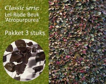 Lei-Rode Beuk - Classic - pakket 3 stuks + EXTRA'S!