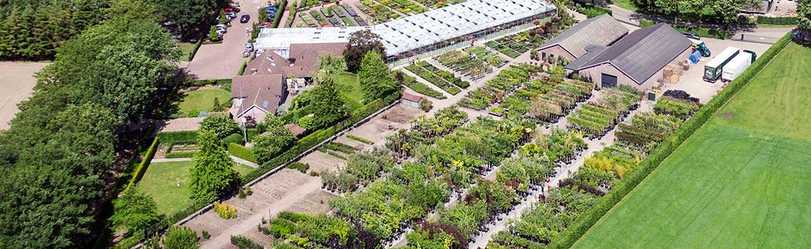 Grote voorraad leibomen in ons planten- en bomencentrum te Knegsel