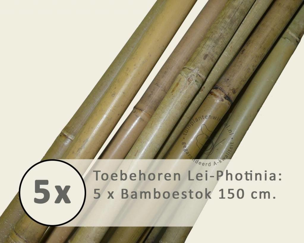Toebehoren Lei-Photinia los bestellen - Bamboestok