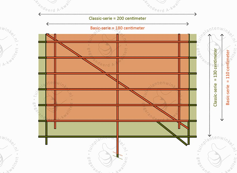Vergelijking rekgrootte basic-leibomen tuinplantenwinkel.nl