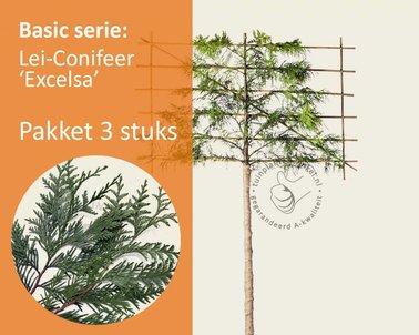 Klik hier om Lei-Conifeer 'Excelsa' - Basic - pakket 3 stuks + EXTRA'S! te kopen