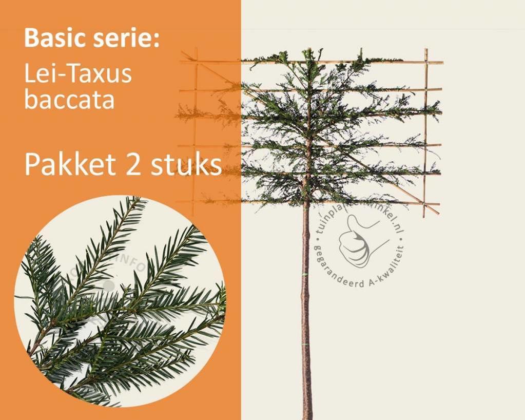 Lei-Taxus - Basic - pakket 2 stuks + EXTRA'S!
