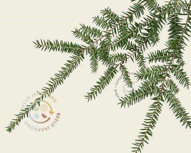 Klik hier om Lei-Tsuga - Basic - individueel te kopen